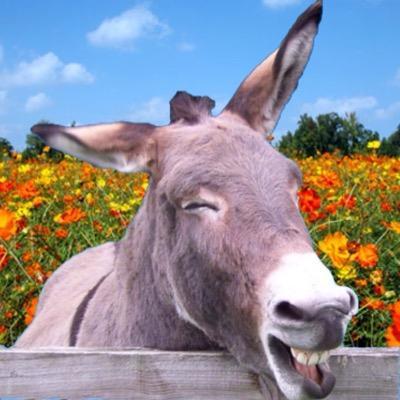 donkey | The English Affair